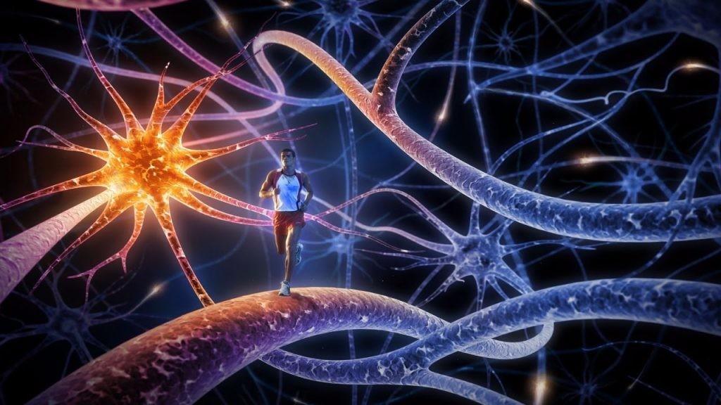 скорость нервного импульса