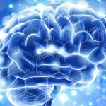 Анатомия человека: нервная система