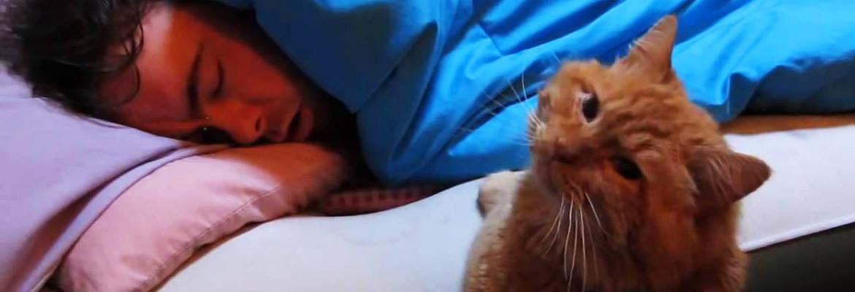 кот будит хозяина