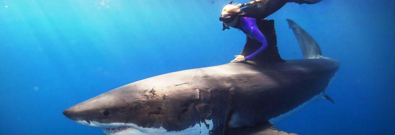 дайвинг с акулой1