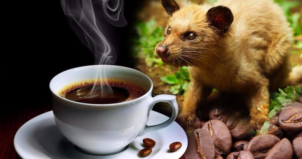 кофе копи лувак