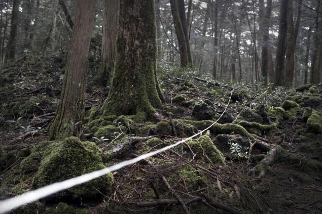 лес самоубийц Япония