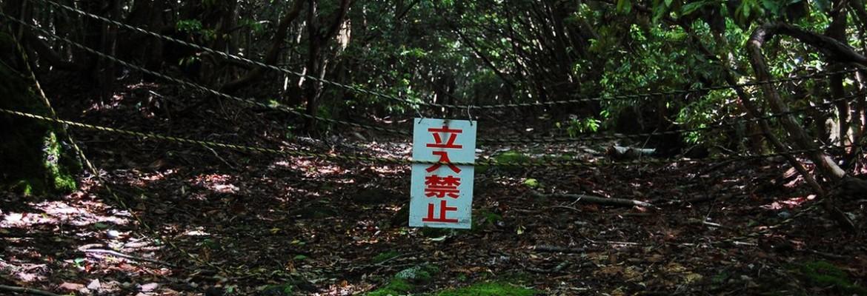 лес в Японии