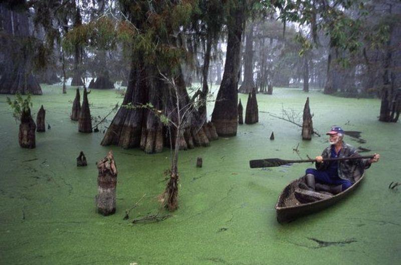 луизиана болото