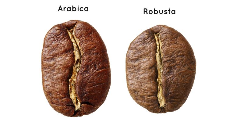 отличие арабики и робусты