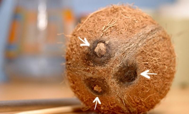 отверстия в кокосе