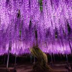 Фантастические деревья, которые растут на нашей планете