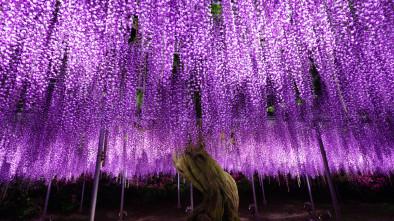 красивые деревья мира
