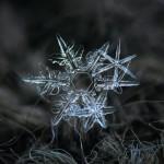 Удивительное рядом: макроснимки снежинок