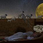 Почему перед сном считают овец, и что по этому поводу говорят ученые